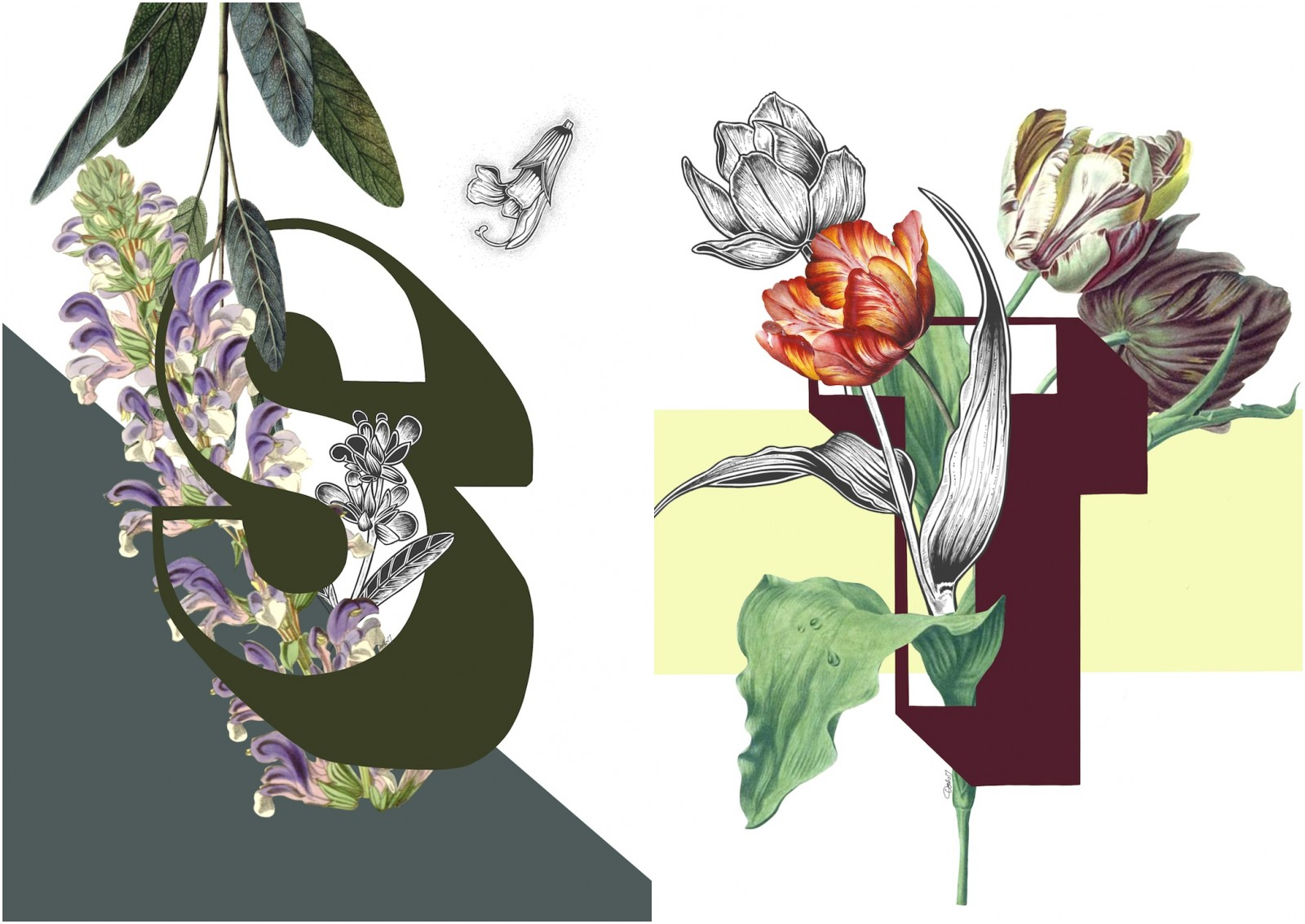 Botanical Alphabet prints by Dodo Flugge.